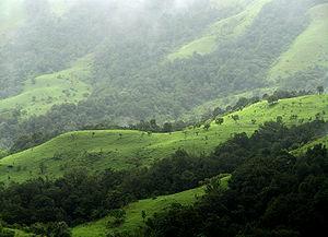 300px-Shola_Grasslands_and_forests_in_the_Kudremukh_National_Park,_Western_Ghats,_Karnataka