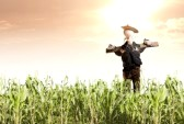 11589145-photo-of-scarecrow-in-corn-field-at-sunrise