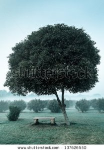 stock-photo-loneliness-solitude-sadness-background-lonely-tree-and-seating-bench-in-morning-mist-fog-137626550