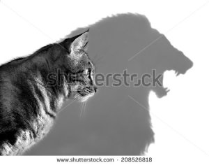 stock-photo-the-lion-within-profile-of-a-house-cat-casting-a-lion-s-shadow-on-a-white-wall-208526818