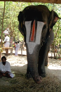 srirangam-temple-elephant