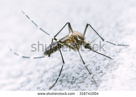 stock-photo-mosquito-drinks-blood-out-of-man-mosquito-causing-dengue-fever-and-malaria-316741004